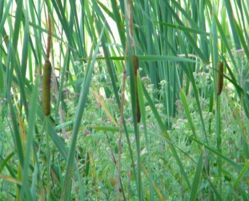 Vegetazione Marcite di Norcia