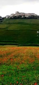 Piani di castelluccio fioriti